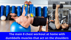 The main 8 chest workout at home with dumbbells muscles that act on the shoulders